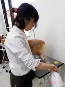 yuzu04