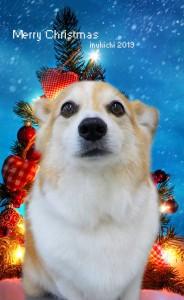 クリスマス2019花田パピー