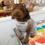 トイプードルのポポちゃんの泥パックエステ♬トリミング専門店いぬ吉